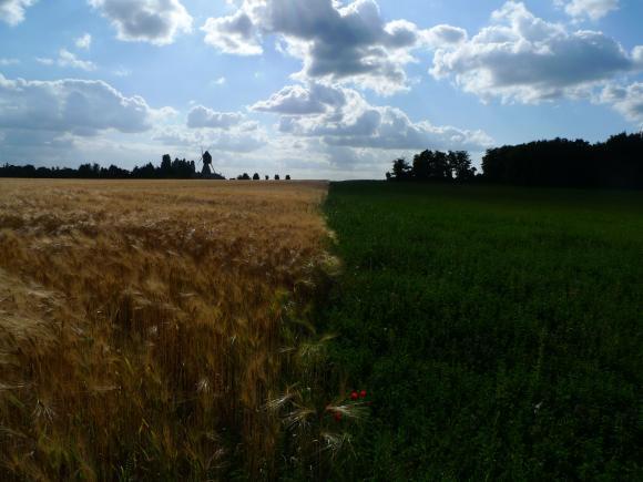 http://clignotants.cowblog.fr/images/Juillet09/P1030331.jpg