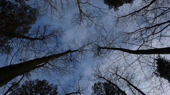 http://clignotants.cowblog.fr/images/P1200018.jpg